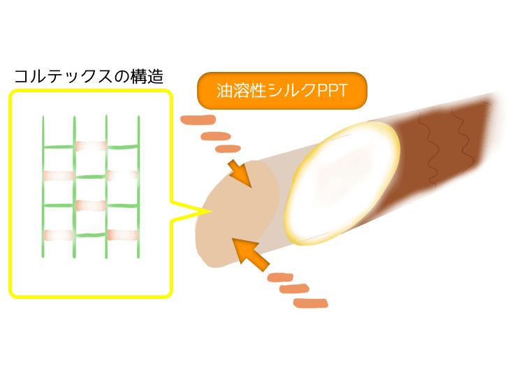 油溶性シルクPPT