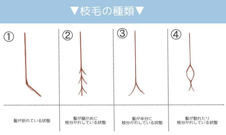 枝毛の種類について